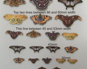 Moths  A Pack of 20  Various  Sizes