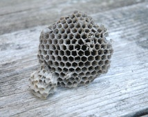 Unique Wasp Nest Related Items Etsy