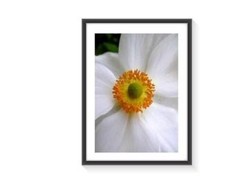 White flower photo art print A4 Framed
