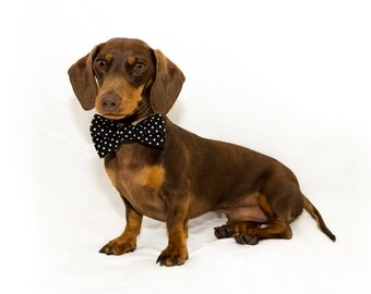 The Dotted Bow Tie