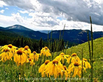 Yellow Wildflowers in the Mountains, Colorado