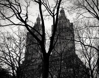 the tree, The San Remo, NY 1997.