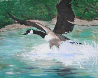 Canada goose - canvas print