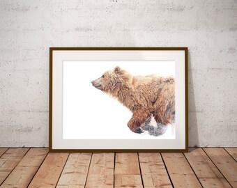 Barlow the Bear Fine Art Print