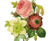 Botanical Art Print, Centifolia Rose, Anemone, Clematis, Floral Canvas Print, Home Wall Decor, Floral Art Print, Victorian Antique Flowers
