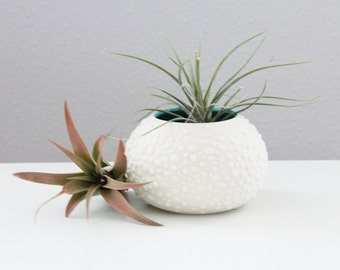 Round Turquoise Vase - Sweet Pea in Turquoise Small - Urchin Vase Turquoise - Turquoise Air Plant Container