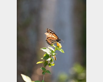 Monarch Butterfly Photo, Lantana Flower Photograph, Floral Bloom Art, Orange Green Blue Print, Butterfly Wall Art, Pretty Nature Photography