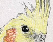 Articles populaires correspondant cockatiel painting sur etsy - Dessin calopsitte ...