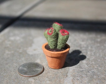 Miniature Needle-felted Succulent - Crassula Convoluta #1