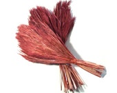 Dyed Grass Accent for Pine Needle Basket Bundle or Fringe Natural Material Pink Tones Coiled Basketry Supply Two Bushy Bluestem Grass Plumes