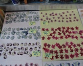 Choose your 30+ Verbena Flowers Grown, Pressed and Preserved in Alaska 410 FL
