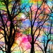 Cotton candy, sunrise, 11x14 inches, mixed media photograph, trees, tree art, #cotton candy, sunrise, bare trees