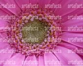 Pink flower close up photograph, printable download, home decor.A 4 landscape