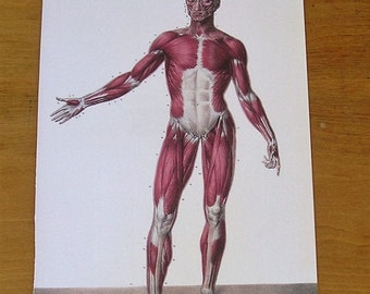 Antique Vintage Anatomy Book Page of the Human Muscle System Anatomical Diagram Human Muscles
