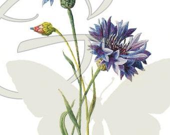 Digital Flower Printable Clip Art Download Illustration Botanical Art Wildflower