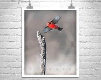 Bird Print, Wall Picture, Bird Photography, Bird in Flight, Red Bird, Wildlife Art, Vermillion, Flycatcher Bird, Vertical Art