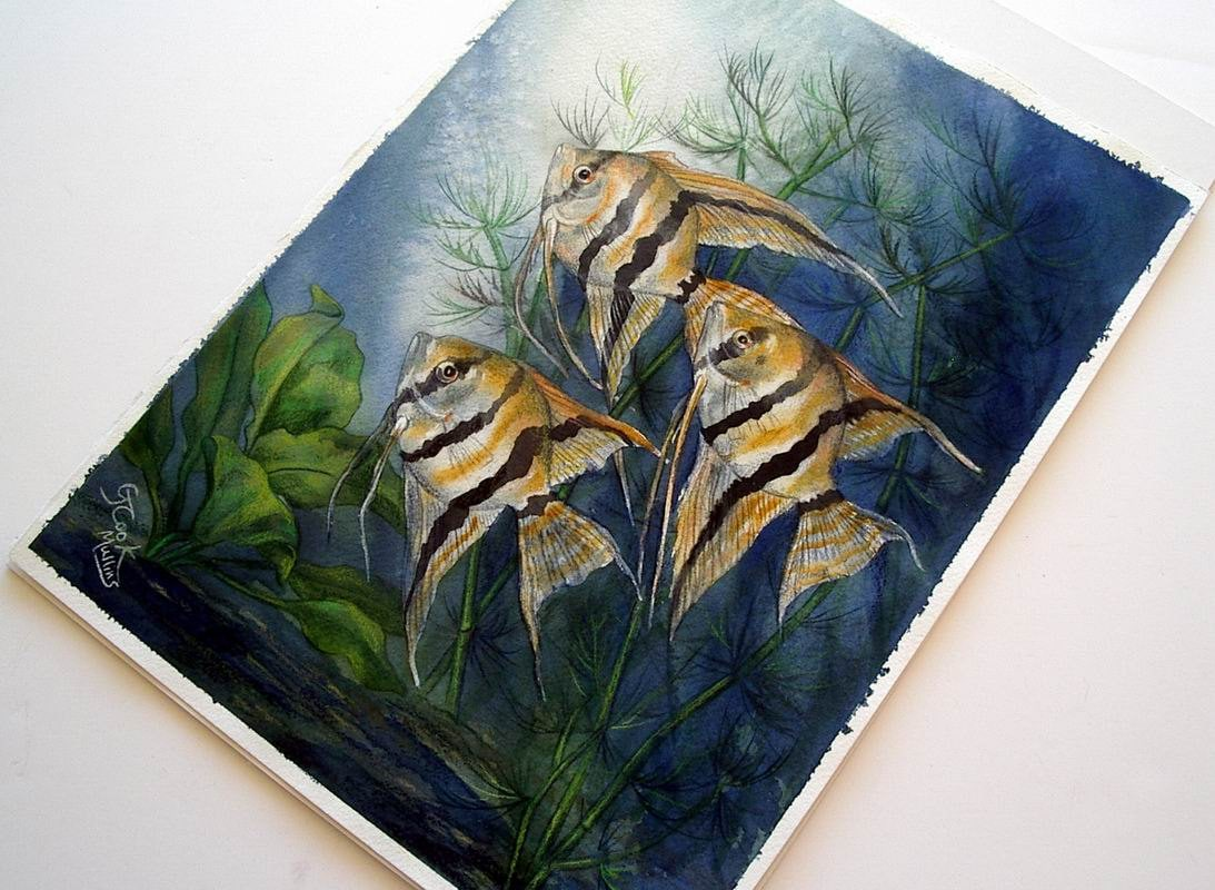 Art colored pencils - Tropical Striped Angelfish And Aquarium Plants Original Watercolor Colored Pencil Art By Allkindsofart Artist Glenda Mullins