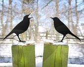 Garden Love Birds Argue. Ornament for Lawn, Pot, Balcony or Post