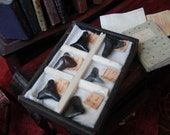 ON SALE Miniature Shark Tooth Collection