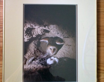 Owl's Nest Framed picture Photo Print