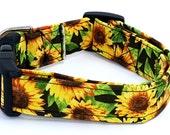 Through The Sunflower Fields Fall Yellow Sunflowers on Black Dog Collar