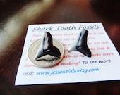 Chunky Bull Shark Post Earrings Unisex Studs 6
