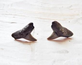 Chunky Bull Shark Post Earrings Unisex Studs 5