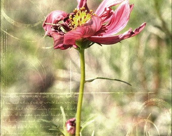 Flower photo, red flower, floral art print, nature photography, wall decor, colorful flower