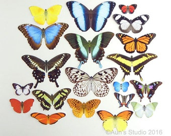 Realistic Premium Paper Butterflies - Cut outs - Large Set of 20