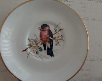 SALE Vintage Hammersley bone china Bird Plate - Bullfinch - gilt edged