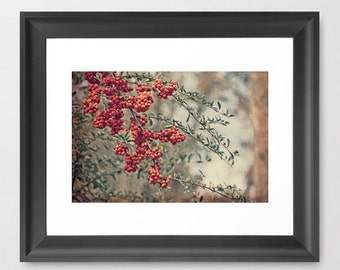 Wall Decor Photograph Red Berries