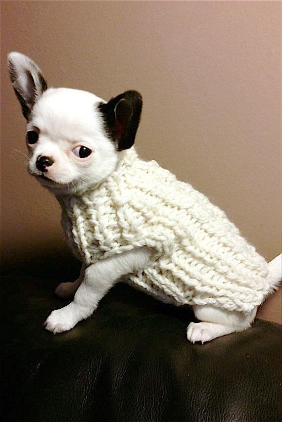Knitting Pattern Chihuahua Jumper : White Milk puppy chihuahua sweater Knit Chihuahua sweater