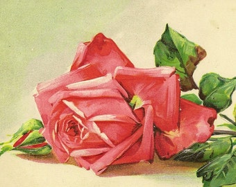 Big Luscious Pink Red Rose Bloom and Bud on Embossed Botanical Vintage Art Postcard