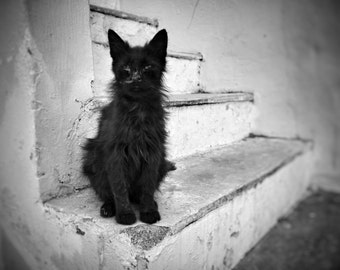 Fine art photography - Black Cat - Black and white