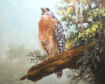 Red Shouldered Hawk 11 x 17 print (image 10.5 x 12.75) personally signed by artist RUSTY RUST / H-58-P