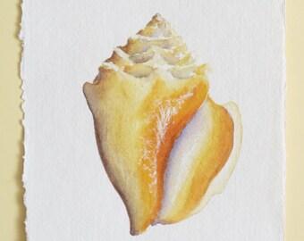 Original watercolour sea shell illustration painting ocean beach series