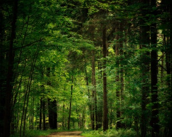 Emerald Green Woodland Print or Canvas Wrap, Forest, Oz, Green Woods, Trees Deep Green, Forest Art, Nature Photography.