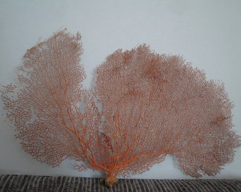 "Natural Sea Fan  17.2"" x 11""  Large Red  Seashells Reef Coral"