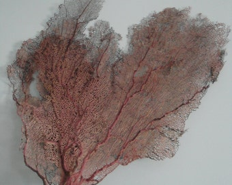 "19"" x 23"" Bahama Pink Sea Fan Fish Tank Seashells Reef Coral"