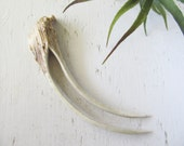 Deer Horn Antler Hair Fork Woodland Bone Tribal Hair Jewelry Natural Stick Pick