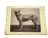 Antique Dog Photo: Late 1800s Dog Photograph on Cabinet Card