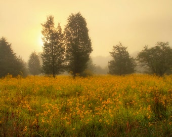 Sunrise Over Wildflower Field, Landscape Photograph, Flowers, Yellow, Gold, Color, Nature, Late Summer, Dreamy, Home Decor, Wall Art