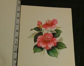 Floral Print 1973 Scafa-Tornabene Art