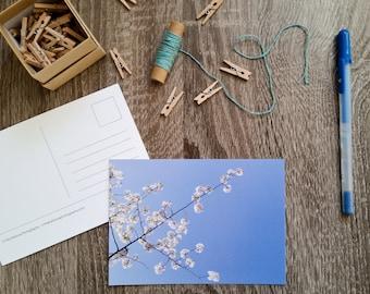 Spring Postcard, Cherry Blossom Photography Postcard, Flower Photo Card