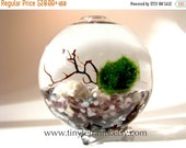 MOTHERS DAY SALE Free 2nd Marimo Ball included- Marimo Terrarium:  Marimo Moss Ball Globe Aquarium, Several Colors Available