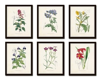 English Garden Botanical Print Set No. 5 - Giclee - Canvas Art Print - Prints and Posters - Vintage Botanical Prints - Gallery Wall - Art