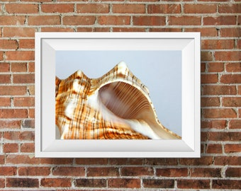 Spiral Sea Shell - nautical photograph beach home decor - summer cottage wall art - still life photography