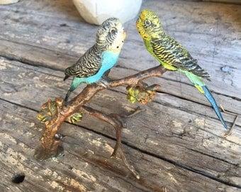 Pair of Vienna Bronze Budgies on Branch