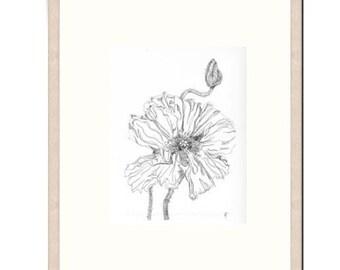 "ORIGINAL - HAND DRAWN - Black, White Ink Drawing, Flower Art, ""Poppy Study 31"". Poppy Pods, Black and White Drawing, Botanical Art"