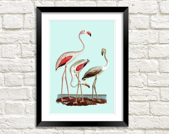 FLAMINGOS ART PRINT: Vintage Bird Art Illustration Wall Hanging (A4 / A3 Size)